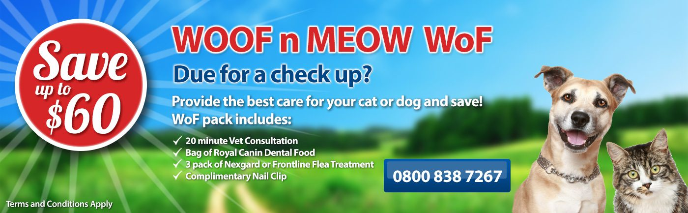 need a check up book a wof and save with tauranga vets