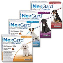 Nexgard Chewables Flea Tick Amp Worm Treatment Tauranga Vets
