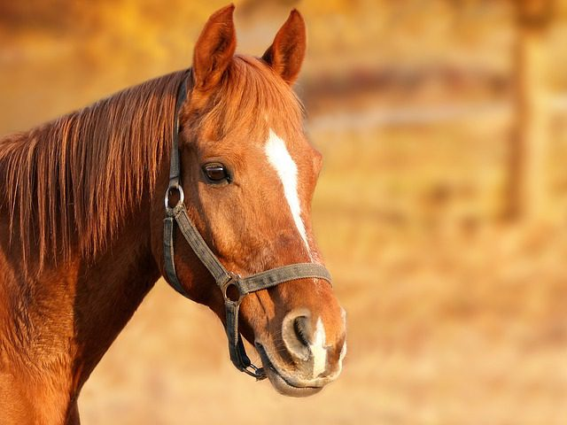 equine worming