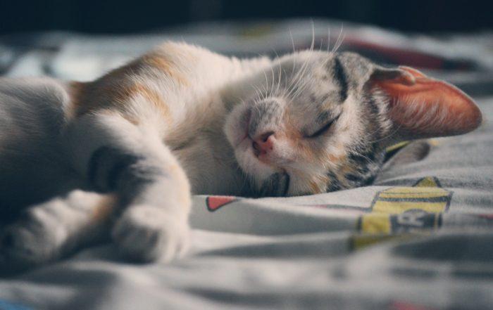 adorable-animal-beautiful-62640