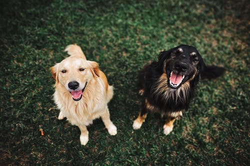 dogs_smiling