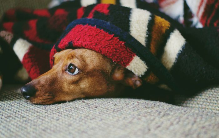 puppy-covered-with-blanket-1359036