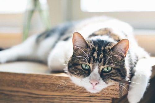 older_cat_unsplash
